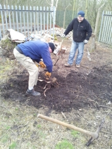 Volunteers uprooting a stump