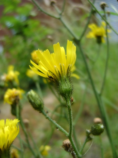 DSC05610 Flower side